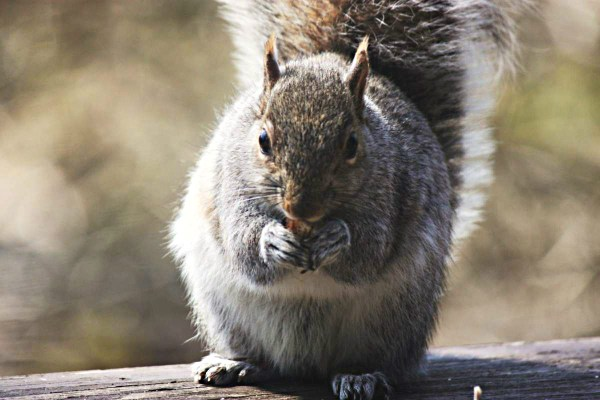 Weekly Photo Challenge: CLOSE UP - A macro shot favorite of mine. squirrel eating a nut