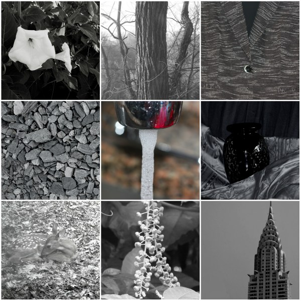 Weekly Photo Challenge: Monochromatic