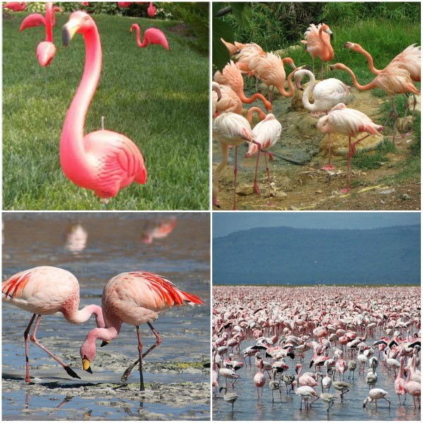 Pink Flamingos: A Preposterous Story - on the plastic kind