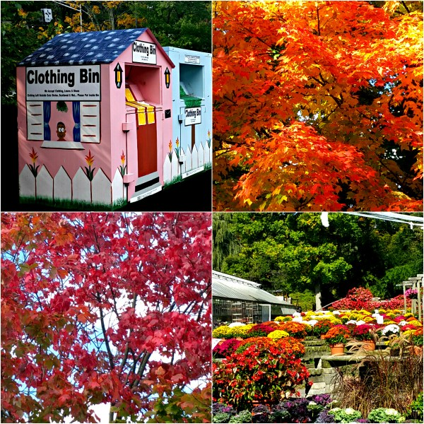 Weekly Photo Challenge: EXTRAORDINARY - Wide ranging colors of Autumn and a colorful clothes dropbox