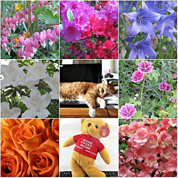 Weekly Photo Challenge: HAPPY PLACE - Home and the garden