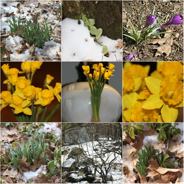 INEVITABLE: Winter's Adieu - The shift in nature slowly comes in