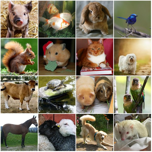Quotes & Reflections: On Our Animal Friends - What do you recall?