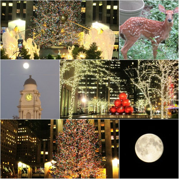 Weekly Photo Challenge: MAGIC -  Holiday season lights, nature and beyond...