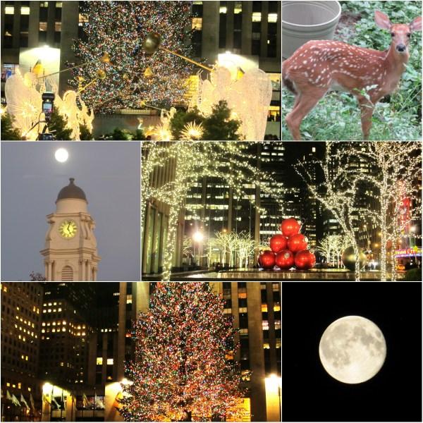 Weekly Photo Challenge: MAGIC -  Holiday season lights, nature and beyond...
