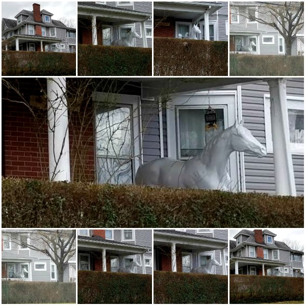 Photo Challenge: Against The Odds - A Horse on the Porch