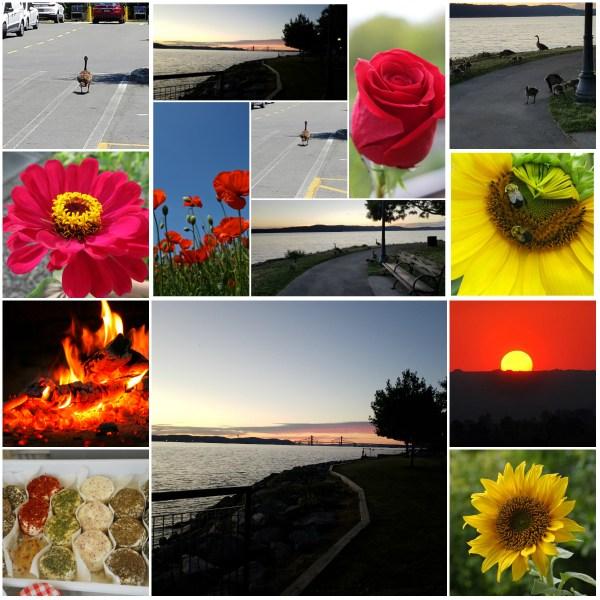 Photo Challenge: SUMMER SOLSTICE
