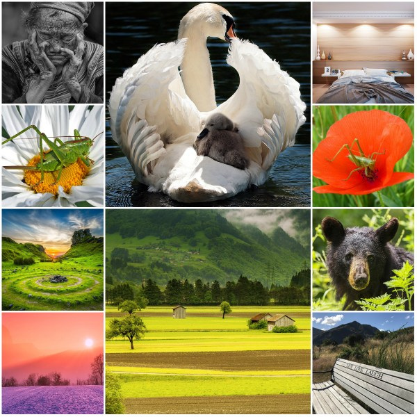 Motivation Mondays: Live Your Wild & Precious Life
