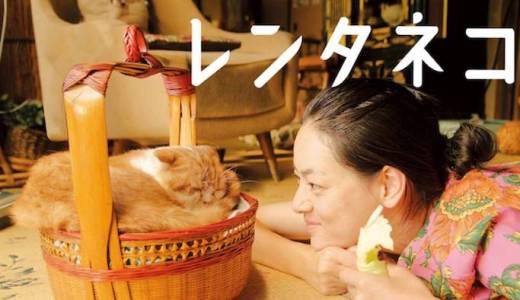映画『レンタネコ』あらすじ・ネタバレ感想!人間の寂しい心を猫たちが癒すハートウォーミングムービー