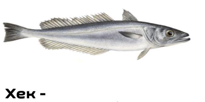 рыба - хек