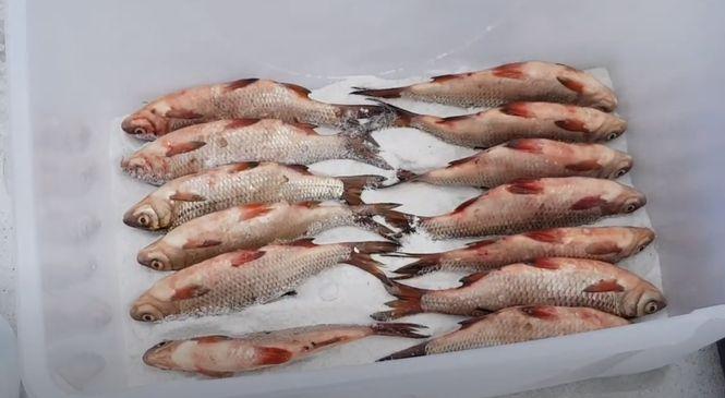 Рыба укладывается в посуду брюшком вверх