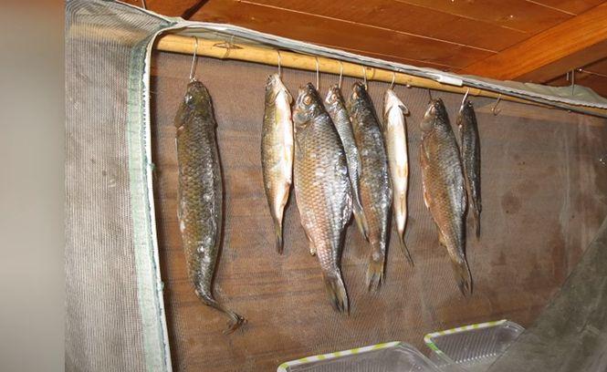 Рыбное филе пропитывается жиром