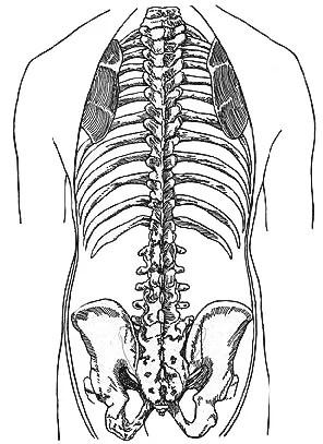 背骨の解剖図