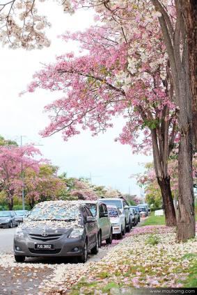 sakura-malaysia-penang-street