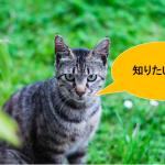 【企画】アメブロ100人記念