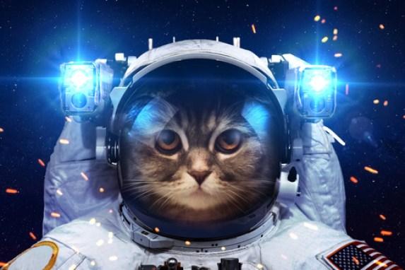 El gato que vino del espacio: película