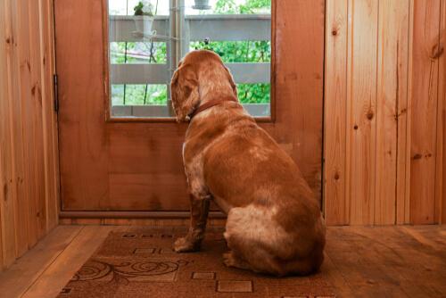 Mi perro se queda solo y llora