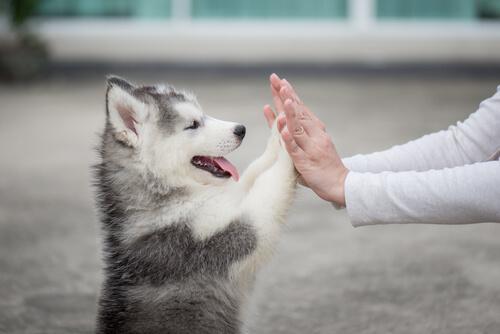 Cosas que los cachorros aún no saben hacer