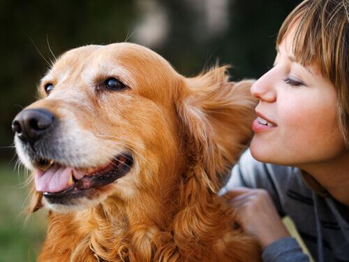 Cómo procesan los perros las palabras de los humanos