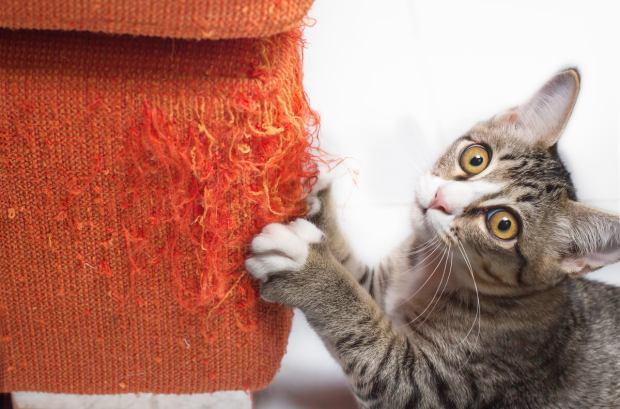 ¿Por qué los gatos arañan los muebles?