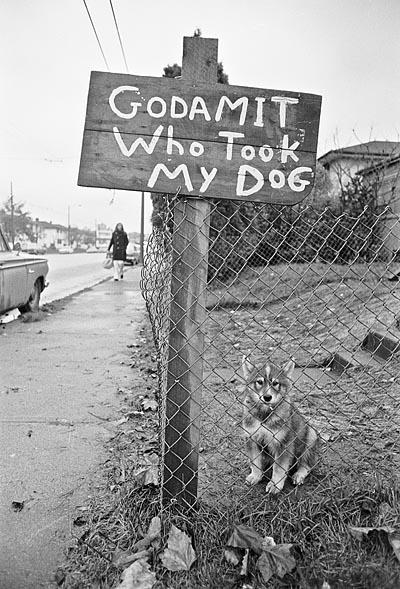 Stolen dog Vancouver