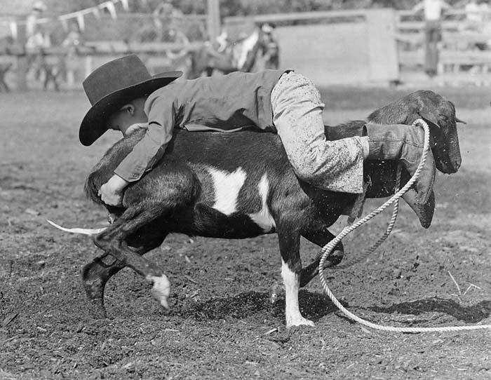 Bobby Whitehead rodeo cowboy