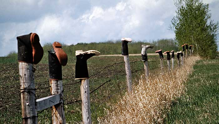 Rubber boots on fence posts in Alberta