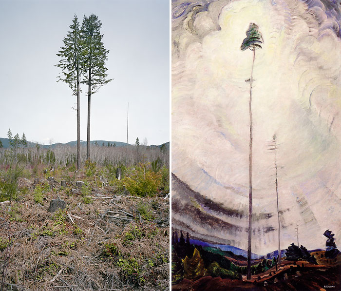 Emily Carr Scorned as Timber