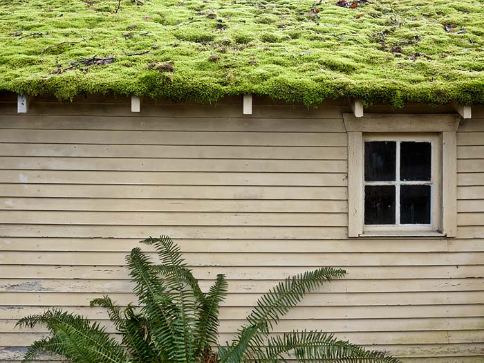 moss covered garage roof