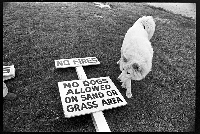 May 19th, 1973 -- Dog with no dogs allowed sign at Jericho Beach