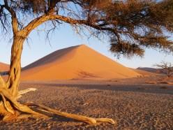 Tree, Dune 45