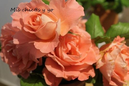rosas otoñales