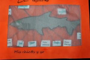 Proyecto primaria tiburones