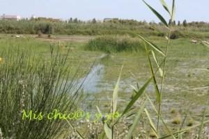 Humedales del Delta del Llobregat