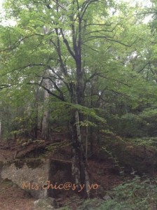 Bosc de Poblet