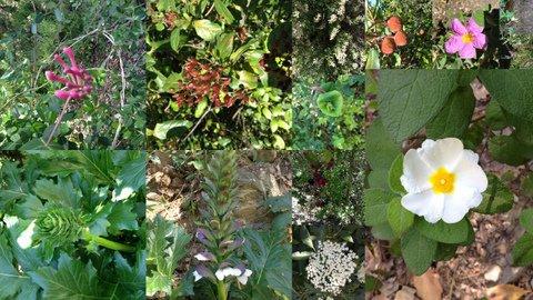budellera flora