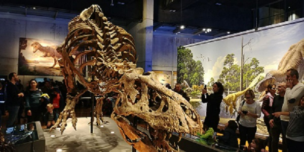 T- Rex Cosmocaixa, Tyrannosaurus Rex