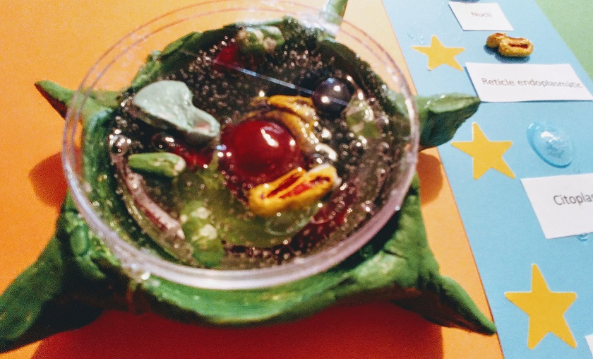 Maqueta de una célula vegetal para primaria