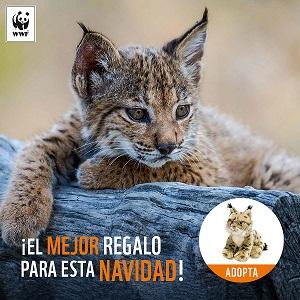 Campaña adopta un lince Madresfera WWF