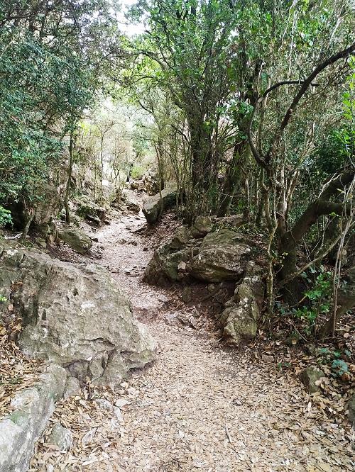 Camino al castillo viejo de Pyrepertuse