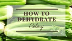 How to dehydrate celery for use in soups, stews, and recipes. Mischyf.com
