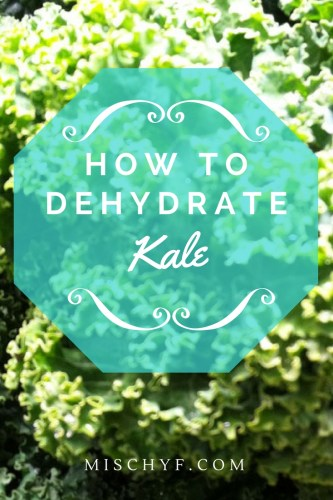 Dehydrating Kale to add extra vitmins to recipes, soups, stews, smoothies without your kids tasting it. Mischyf.com