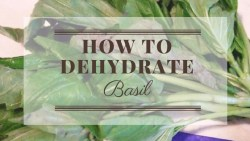 How To Dehydrate Basil. mischyf.com