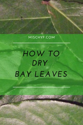 How to dry bay leaves for future meals. When you need a boost of flavor.