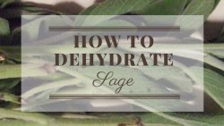How To Dehydrate Sage https://mischyf.com/dehydrate-sage/