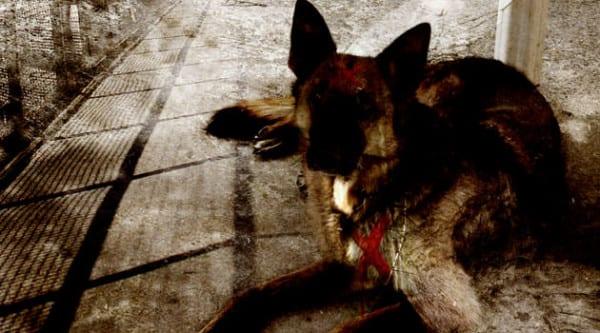 perro_guardabosques