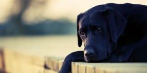 perro-depresion-sintomas1