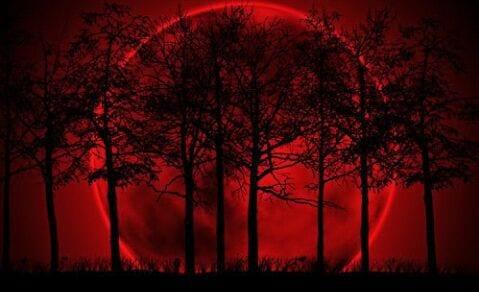 bosque luna roja