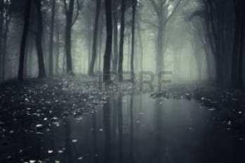 12957347-estanque-en-un-bosque-de-niebla-y-las-hojas-ca-das