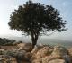 Árvore solitária sobre um monte
